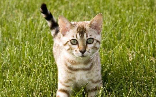 Animales. Gatito en el Jardín.
