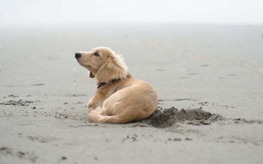 Un perrito en la playa.