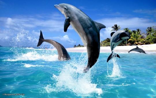 Delfines para fondo.