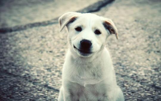 Fondo de Escritorio Cachorro Simpático