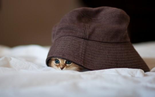 Fondo de Gatito Miedoso