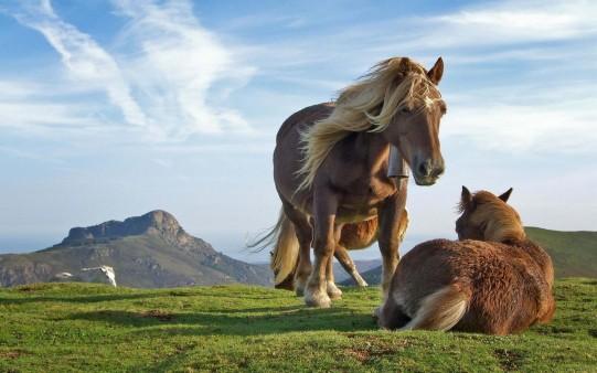 Caballos de Montaña