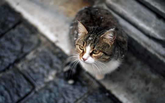 Fondo Gatito con Mirada Tierna