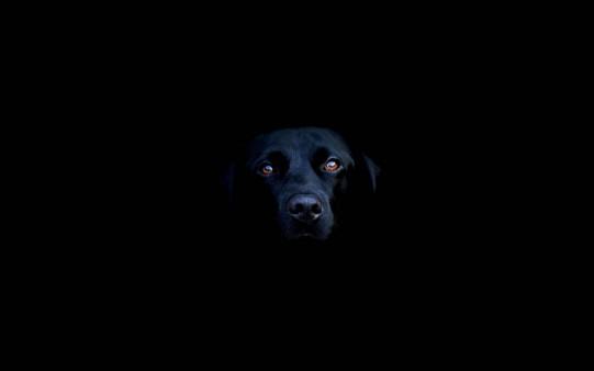 Perro en la Osuridad
